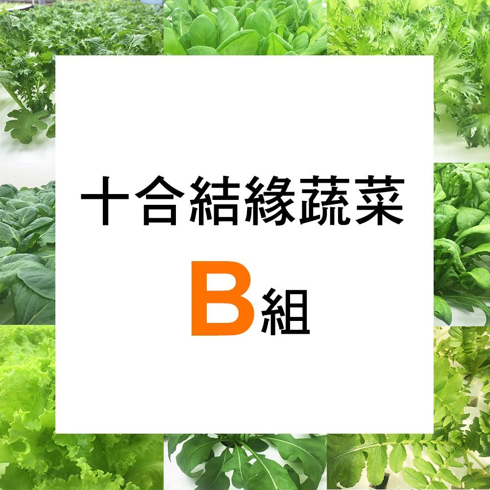 【微笑農夫】十合結緣蔬菜B 組