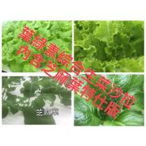 葉綠素綜合生菜(內含芝麻葉)特仕版